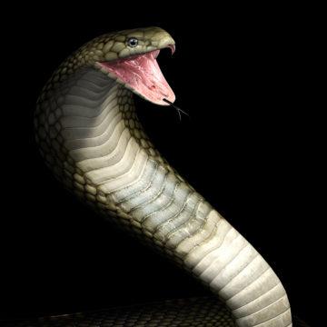 viper cobra snake